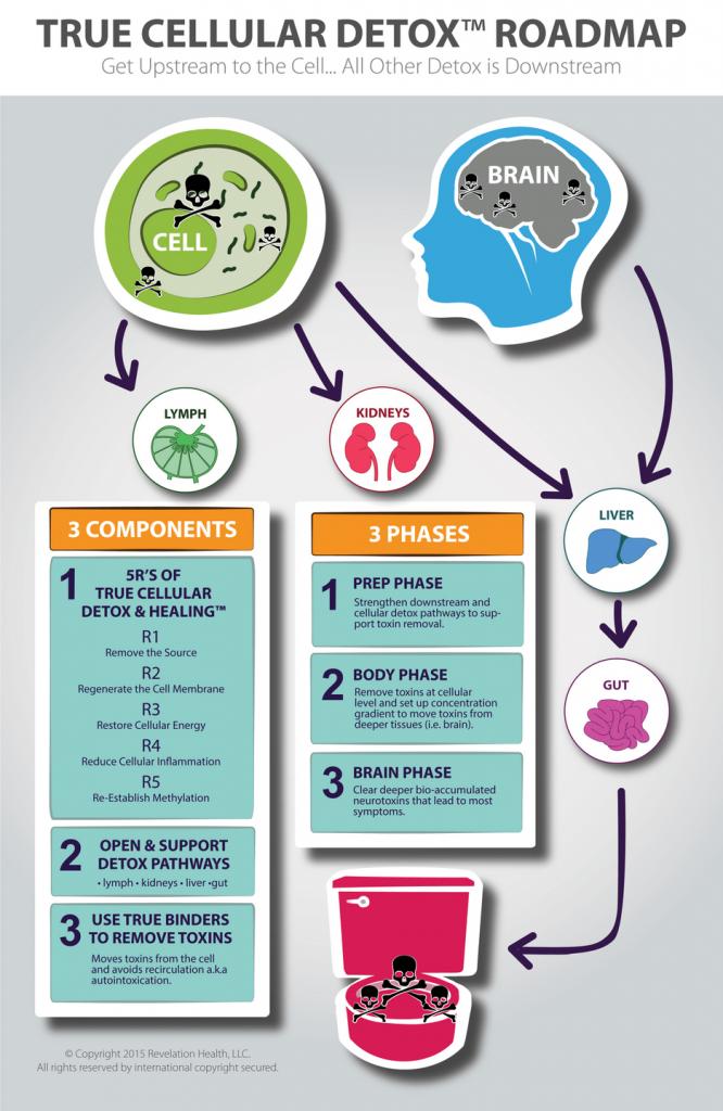 cellular detox infographic